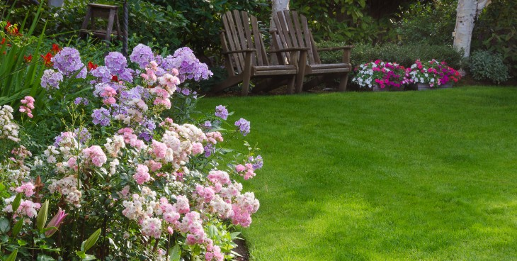 Clusters of pink and white tea roses by a lush green lawn with two rustic chairs waiting for you in the background.