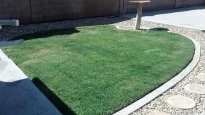 Grass after