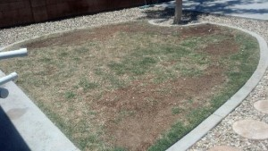 Grass before