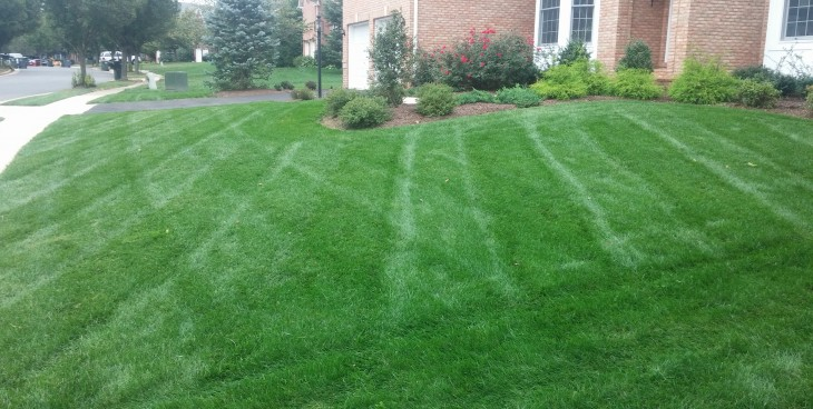Homeowner Lawn