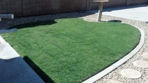 Steve Garvey's lawn after Screamin' Green