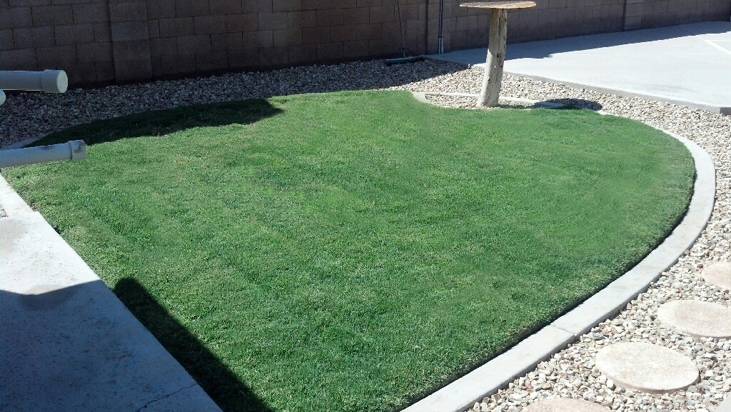 Steve Garvey's lawn after Screamin' Green